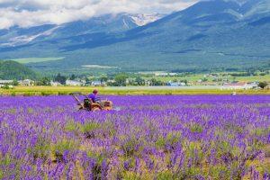 Hokkaido Travel